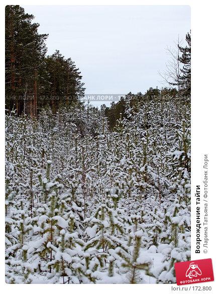 Возрождение тайги, фото № 172800, снято 1 января 2008 г. (c) Ларина Татьяна / Фотобанк Лори
