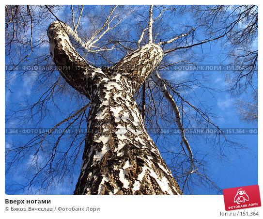 Вверх ногами, фото № 151364, снято 8 апреля 2007 г. (c) Бяков Вячеслав / Фотобанк Лори