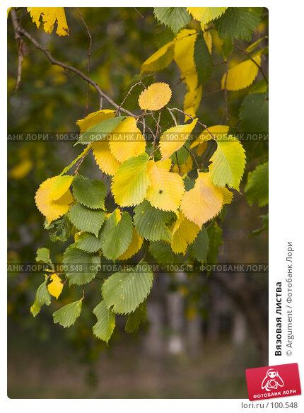 Купить «Вязовая листва», фото № 100548, снято 7 октября 2007 г. (c) Argument / Фотобанк Лори