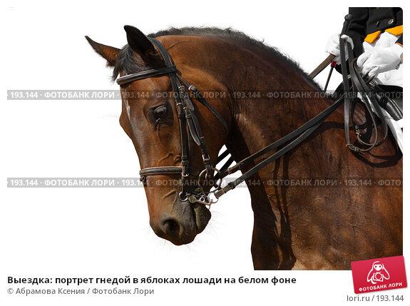 Выездка: портрет гнедой в яблоках лошади на белом фоне, фото № 193144, снято 12 августа 2006 г. (c) Абрамова Ксения / Фотобанк Лори