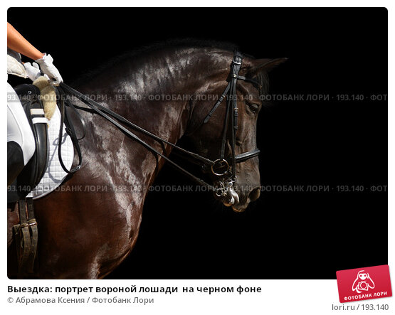 Выездка: портрет вороной лошади  на черном фоне, фото № 193140, снято 12 августа 2006 г. (c) Абрамова Ксения / Фотобанк Лори