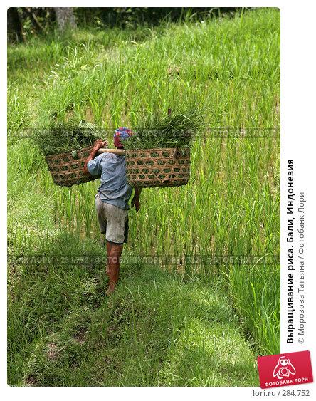 Выращивание риса. Бали, Индонезия, фото № 284752, снято 24 февраля 2008 г. (c) Морозова Татьяна / Фотобанк Лори