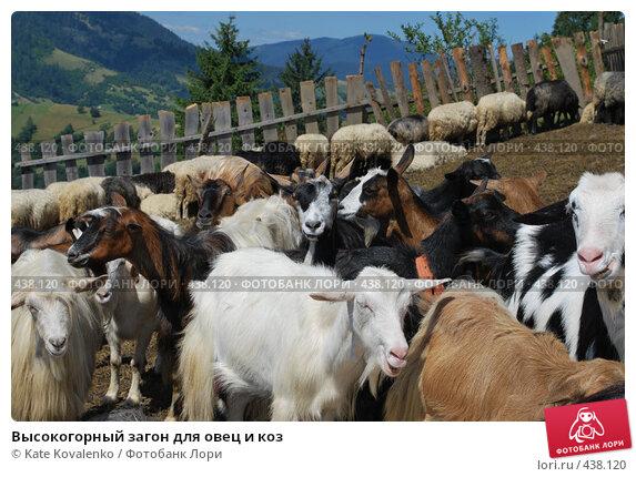 Купить «Высокогорный загон для овец и коз», фото № 438120, снято 19 августа 2008 г. (c) Kate Kovalenko / Фотобанк Лори