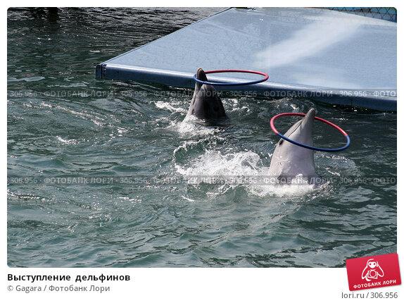 Выступление  дельфинов, фото № 306956, снято 1 июля 2006 г. (c) Gagara / Фотобанк Лори