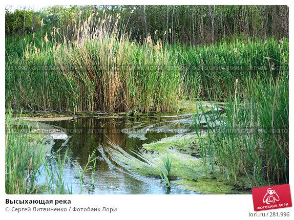 Высыхающая река, фото № 281996, снято 11 мая 2008 г. (c) Сергей Литвиненко / Фотобанк Лори