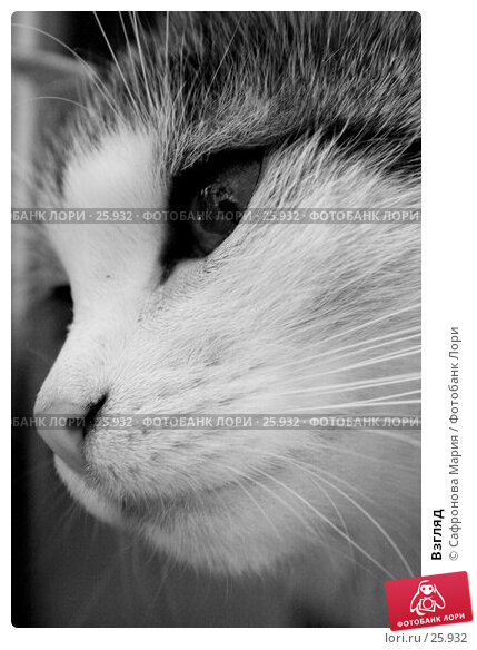 Взгляд, фото № 25932, снято 4 августа 2005 г. (c) Сафронова Мария / Фотобанк Лори