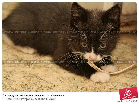 Купить «Взгляд черного маленького   котенка», фото № 139816, снято 1 октября 2007 г. (c) Останина Екатерина / Фотобанк Лори