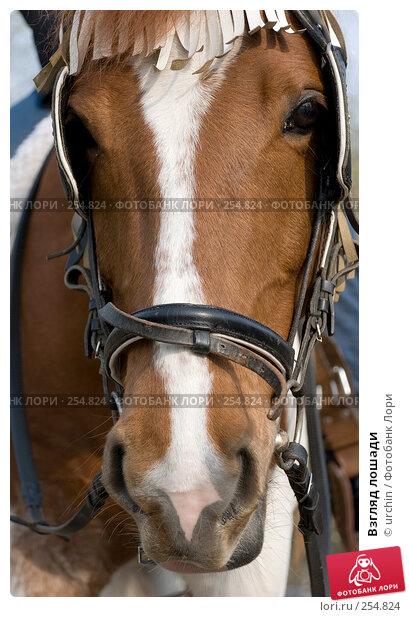 Взгляд лошади, фото № 254824, снято 12 апреля 2008 г. (c) urchin / Фотобанк Лори