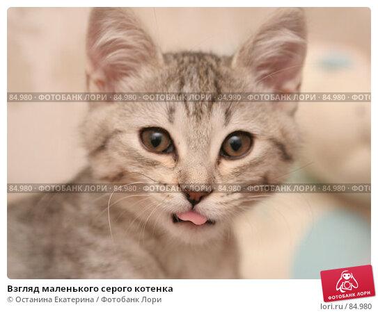 Взгляд маленького серого котенка, фото № 84980, снято 5 сентября 2007 г. (c) Останина Екатерина / Фотобанк Лори