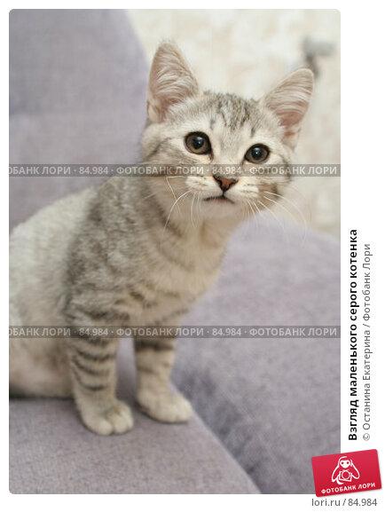 Купить «Взгляд маленького серого котенка», фото № 84984, снято 5 сентября 2007 г. (c) Останина Екатерина / Фотобанк Лори