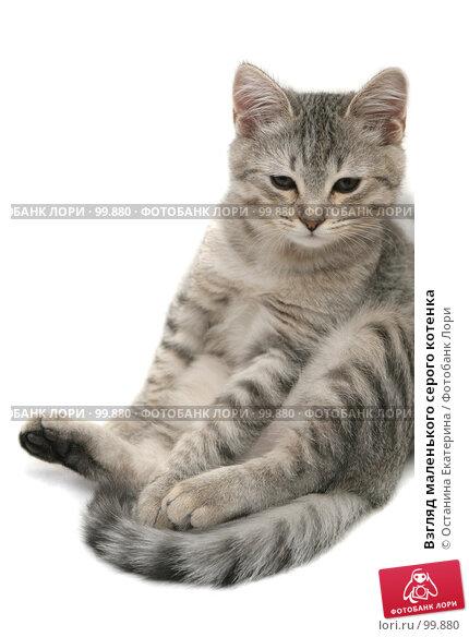 Купить «Взгляд маленького серого котенка», фото № 99880, снято 27 сентября 2007 г. (c) Останина Екатерина / Фотобанк Лори