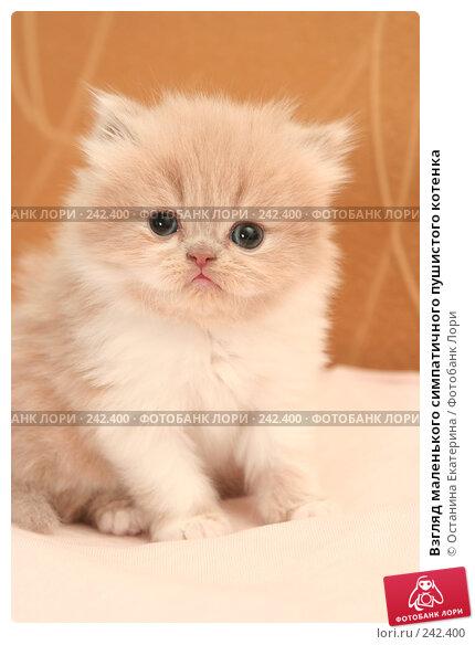 Взгляд маленького симпатичного пушистого котенка, фото № 242400, снято 18 марта 2008 г. (c) Останина Екатерина / Фотобанк Лори