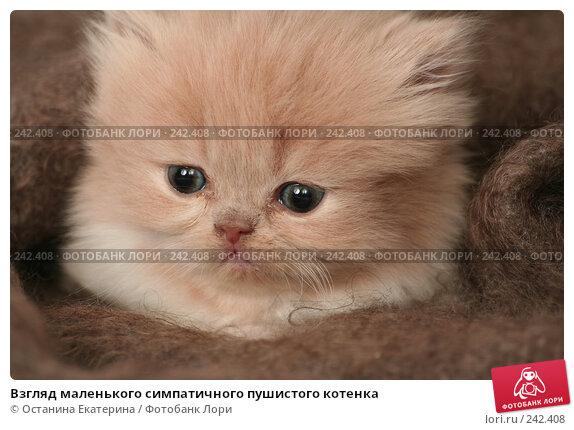 Купить «Взгляд маленького симпатичного пушистого котенка», фото № 242408, снято 19 марта 2008 г. (c) Останина Екатерина / Фотобанк Лори