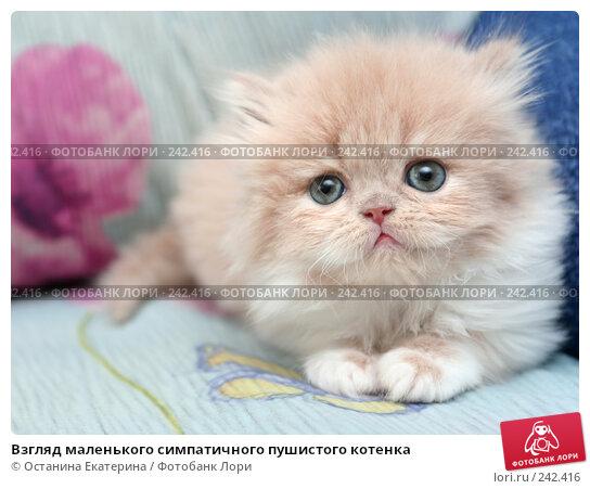Взгляд маленького симпатичного пушистого котенка, фото № 242416, снято 28 марта 2008 г. (c) Останина Екатерина / Фотобанк Лори