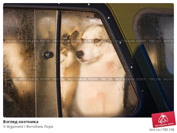 Взгляд охотника, фото № 190136, снято 5 января 2008 г. (c) Argument / Фотобанк Лори