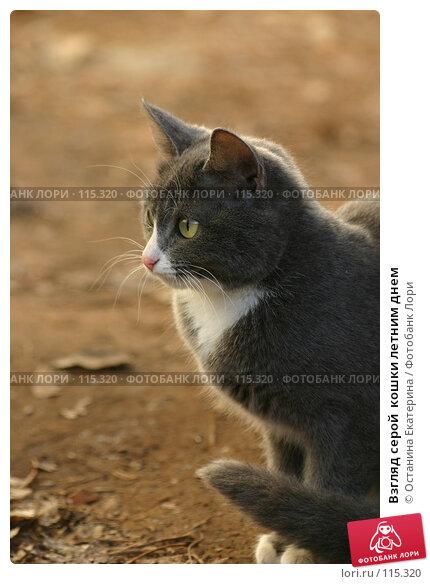 Взгляд серой  кошки летним днем, фото № 115320, снято 9 ноября 2005 г. (c) Останина Екатерина / Фотобанк Лори