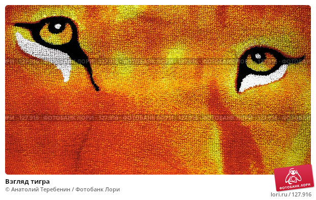 Взгляд тигра, фото № 127916, снято 24 ноября 2007 г. (c) Анатолий Теребенин / Фотобанк Лори