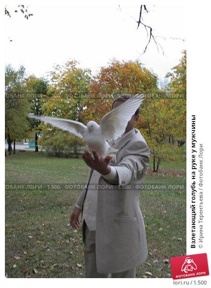 Взлетающий голубь на руке у мужчины, эксклюзивное фото № 1500, снято 8 октября 2005 г. (c) Ирина Терентьева / Фотобанк Лори