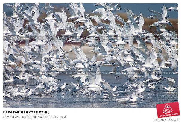 Купить «Взлетевшая стая птиц», фото № 137324, снято 19 сентября 2004 г. (c) Максим Горпенюк / Фотобанк Лори
