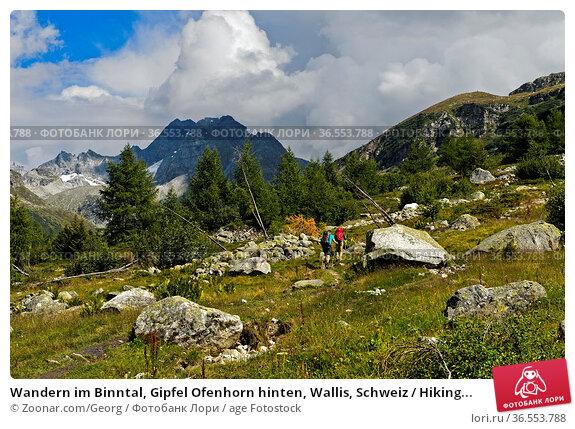 Wandern im Binntal, Gipfel Ofenhorn hinten, Wallis, Schweiz / Hiking... Стоковое фото, фотограф Zoonar.com/Georg / age Fotostock / Фотобанк Лори