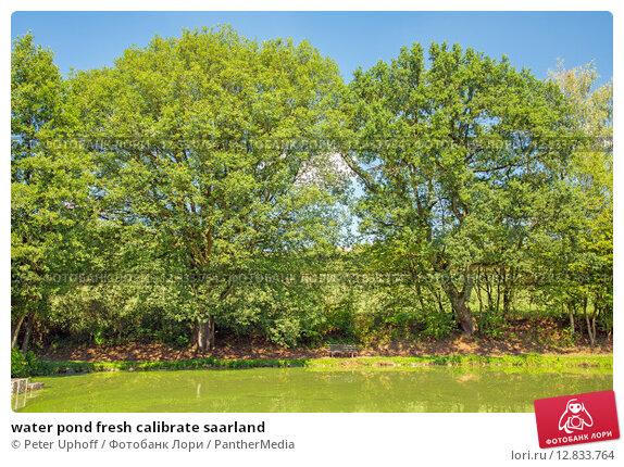 Купить «water pond fresh calibrate saarland», фото № 12833764, снято 24 апреля 2019 г. (c) PantherMedia / Фотобанк Лори