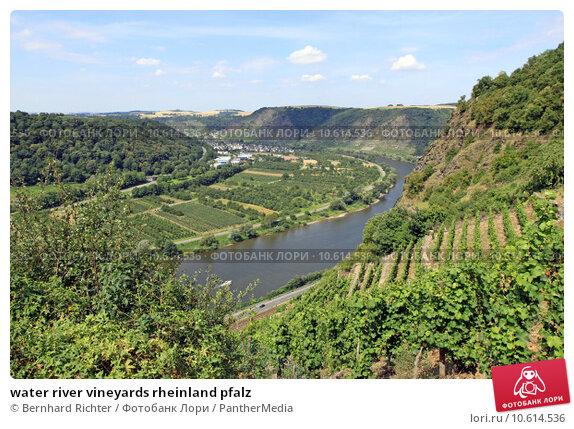 water river vineyards rheinland pfalz. Стоковое фото, фотограф Bernhard Richter / PantherMedia / Фотобанк Лори