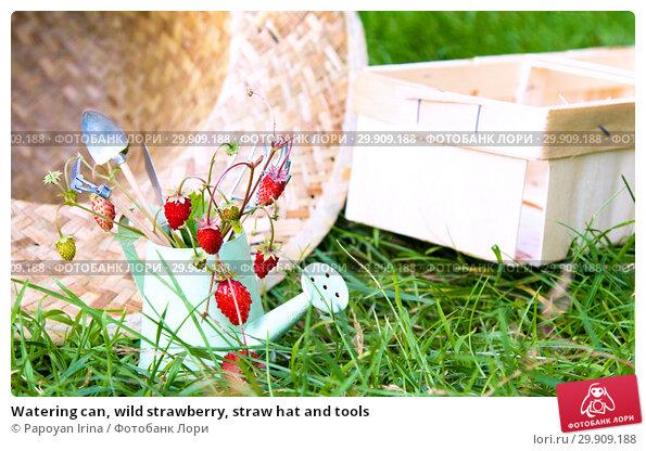 Купить «Watering can, wild strawberry, straw hat and tools», фото № 29909188, снято 19 июля 2018 г. (c) Papoyan Irina / Фотобанк Лори