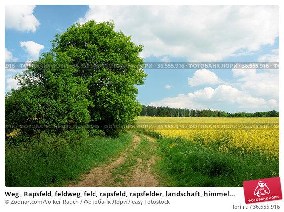 Weg , Rapsfeld, feldweg, feld, rapsfeld, rapsfelder, landschaft, himmel... Стоковое фото, фотограф Zoonar.com/Volker Rauch / easy Fotostock / Фотобанк Лори