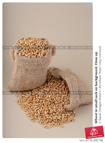 Wheat in small sack on background, Close up. Стоковое фото, фотограф Dipak Chhagan Shelare / easy Fotostock / Фотобанк Лори