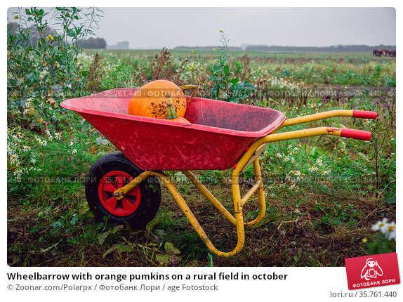 Wheelbarrow with orange pumkins on a rural field in october. Стоковое фото, фотограф Zoonar.com/Polarpx / age Fotostock / Фотобанк Лори