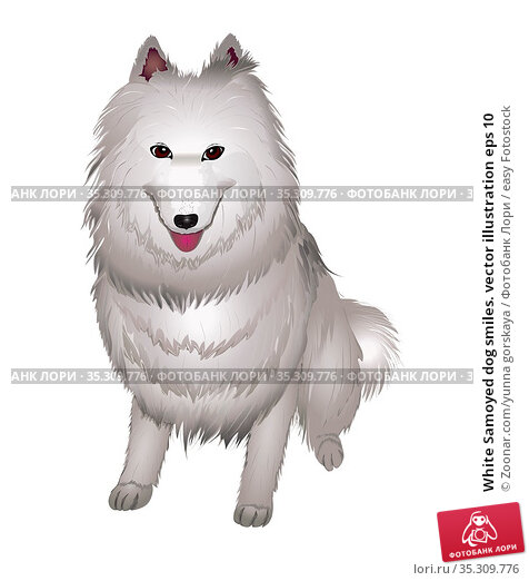 White Samoyed dog smiles. vector illustration eps 10. Стоковое фото, фотограф Zoonar.com/yunna gorskaya / easy Fotostock / Фотобанк Лори