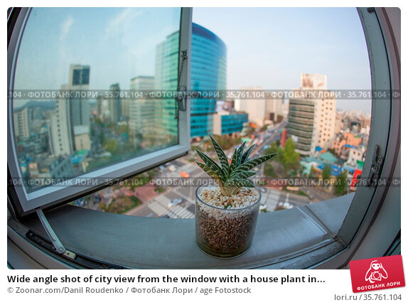 Wide angle shot of city view from the window with a house plant in... Стоковое фото, фотограф Zoonar.com/Danil Roudenko / age Fotostock / Фотобанк Лори