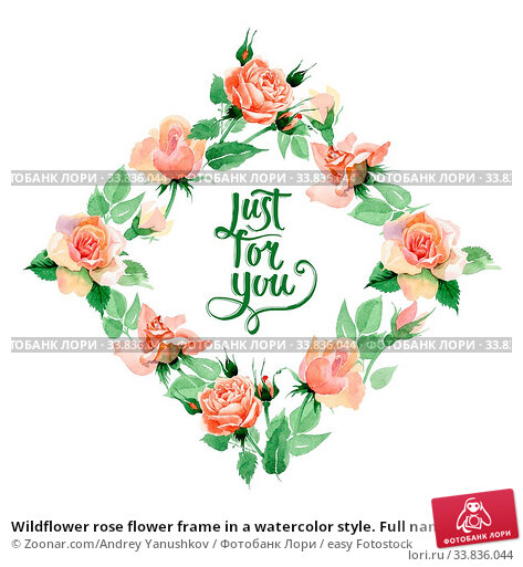 Купить «Wildflower rose flower frame in a watercolor style. Full name of the plant: rore, rosa, hulthemia. Aquarelle wild flower for background, texture, wrapper pattern, frame or border.», фото № 33836044, снято 4 июня 2020 г. (c) easy Fotostock / Фотобанк Лори