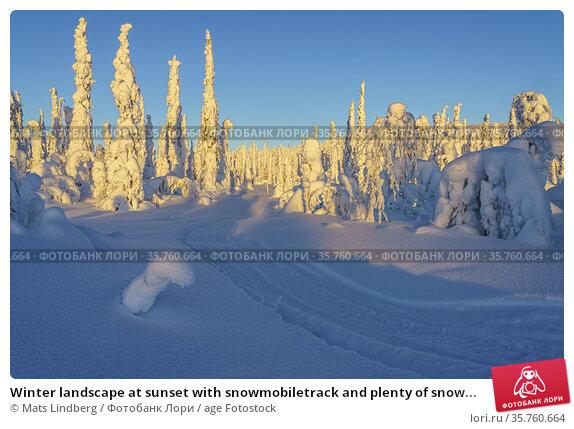 Winter landscape at sunset with snowmobiletrack and plenty of snow... Стоковое фото, фотограф Mats Lindberg / age Fotostock / Фотобанк Лори