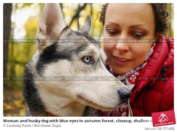Купить «Woman and husky dog with blue eyes in autumn forest, closeup, shallow dof», фото № 28171668, снято 18 октября 2015 г. (c) Losevsky Pavel / Фотобанк Лори