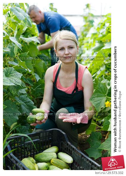 Купить «Woman with husband gathering in crops of cucumbers», фото № 29573332, снято 5 июля 2018 г. (c) Яков Филимонов / Фотобанк Лори