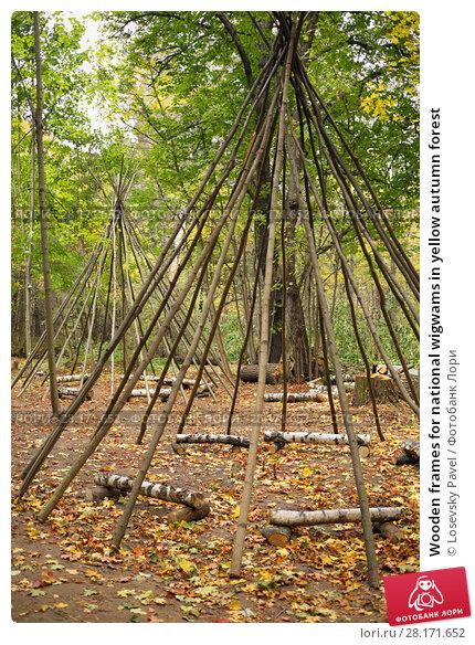 Купить «Wooden frames for national wigwams in yellow autumn forest», фото № 28171652, снято 18 октября 2015 г. (c) Losevsky Pavel / Фотобанк Лори