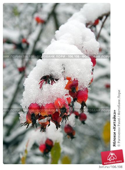 Яблоки «Китайка», фото № 106108, снято 16 октября 2007 г. (c) Parmenov Pavel / Фотобанк Лори