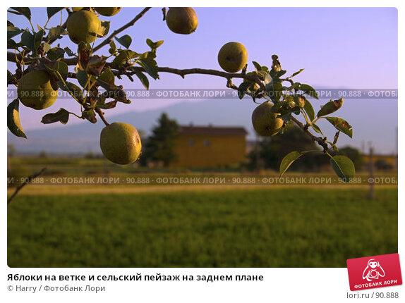 Яблоки на ветке и сельский пейзаж на заднем плане, фото № 90888, снято 17 августа 2007 г. (c) Harry / Фотобанк Лори