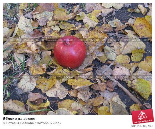 Яблоко на земле, фото № 86740, снято 22 сентября 2007 г. (c) Наталья Волкова / Фотобанк Лори