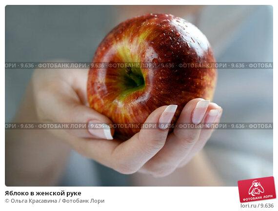 Купить «Яблоко в женской руке», фото № 9636, снято 13 июля 2006 г. (c) Ольга Красавина / Фотобанк Лори