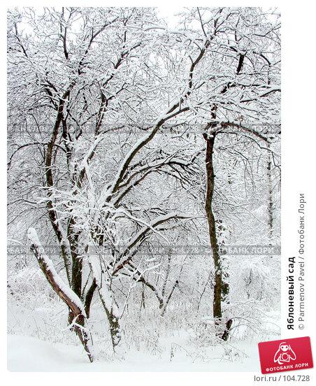 Купить «Яблоневый сад», фото № 104728, снято 22 ноября 2017 г. (c) Parmenov Pavel / Фотобанк Лори