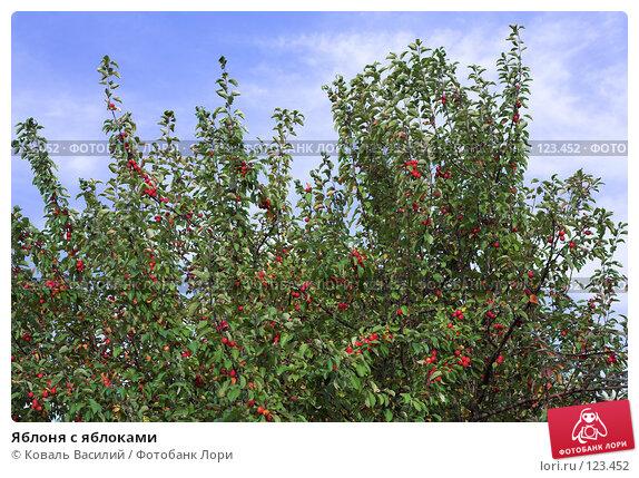 Купить «Яблоня с яблоками», фото № 123452, снято 17 сентября 2006 г. (c) Коваль Василий / Фотобанк Лори