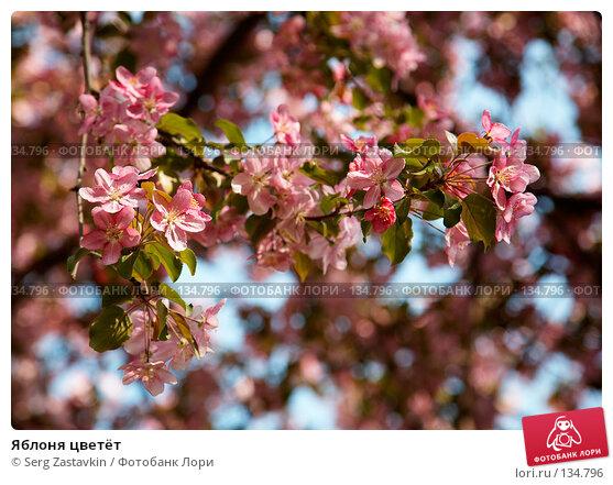 Яблоня цветёт, фото № 134796, снято 5 июня 2006 г. (c) Serg Zastavkin / Фотобанк Лори