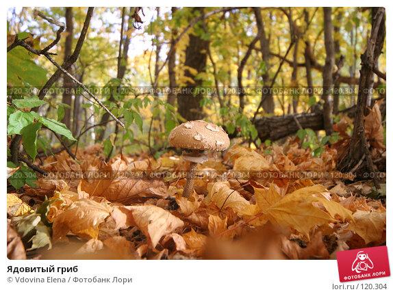 Купить «Ядовитый гриб», фото № 120304, снято 7 октября 2007 г. (c) Vdovina Elena / Фотобанк Лори