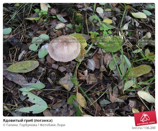 Купить «Ядовитый гриб (поганка)», фото № 136200, снято 18 октября 2006 г. (c) Галина  Горбунова / Фотобанк Лори
