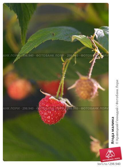 Купить «Ягода малина», фото № 298940, снято 12 сентября 2004 г. (c) Кравецкий Геннадий / Фотобанк Лори