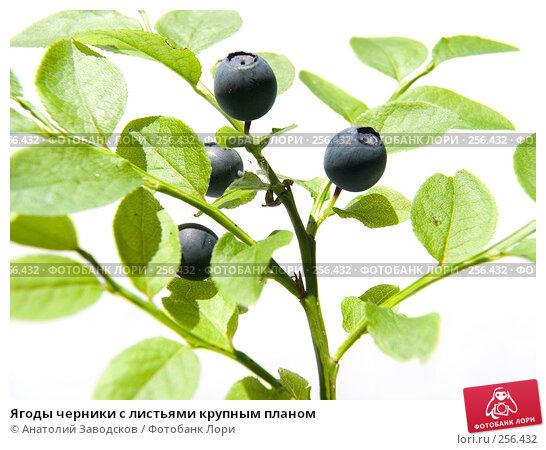 Ягоды черники с листьями крупным планом, фото № 256432, снято 8 июля 2006 г. (c) Анатолий Заводсков / Фотобанк Лори