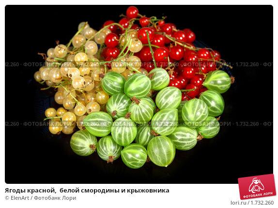 Купить «Ягоды красной,  белой смородины и крыжовника», фото № 1732260, снято 16 июля 2009 г. (c) ElenArt / Фотобанк Лори