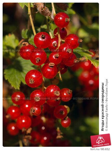 Ягоды красной смородины, фото № 80652, снято 9 августа 2007 г. (c) Александр Fanfo / Фотобанк Лори